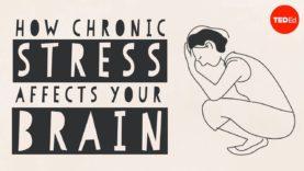 How stress affects your brain – Madhumita Murgia